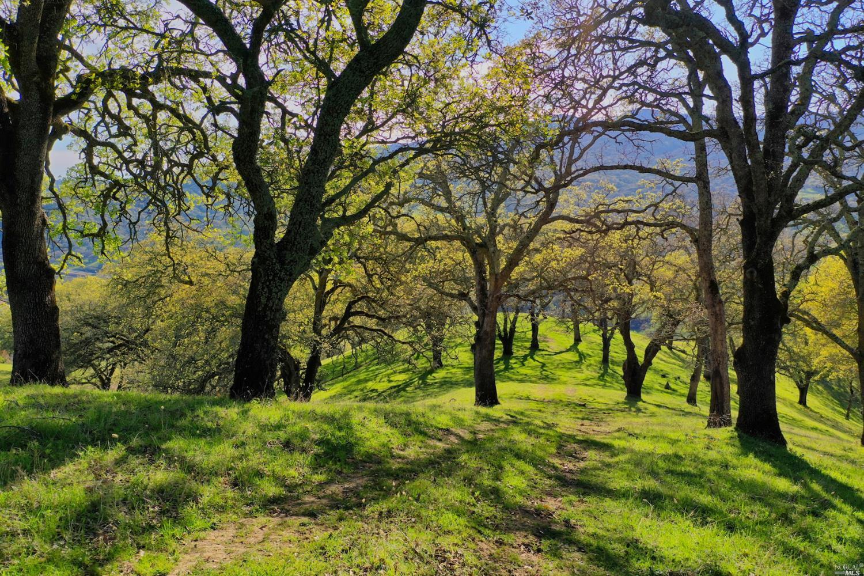 Photo of 0 Quail Ridge Dr in 纳帕, CA