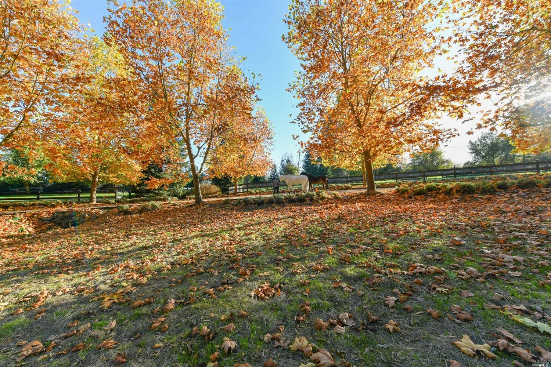 Listing 321033156 : 105  Purvine Road, Petaluma, CA, 94952  (photo 78)
