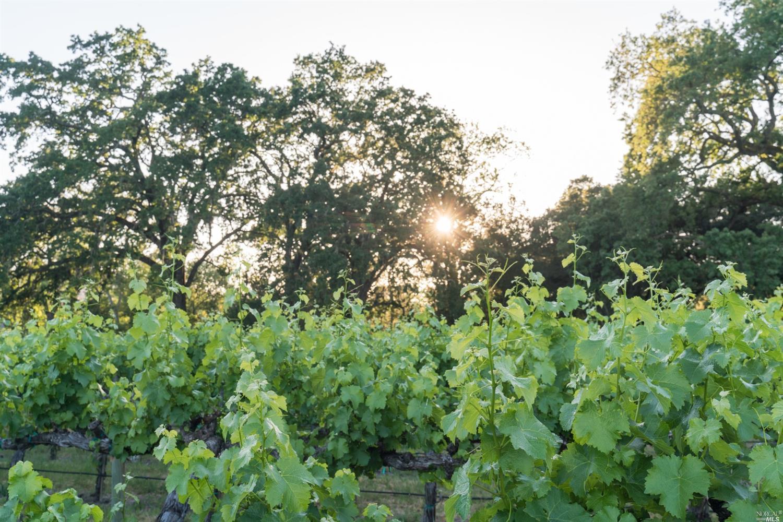 Listing 321043585 : 3761  Silverado Trail, Calistoga, CA, 94515  (photo 35)