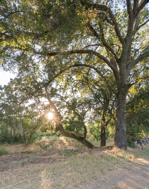 Listing 321043585 : 3761  Silverado Trail, Calistoga, CA, 94515  (photo 36)