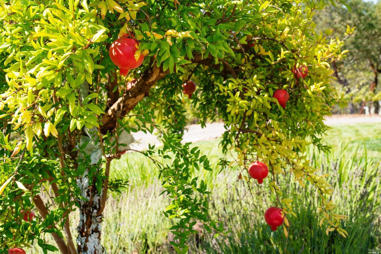 Listing 321087917 : 23700  Dutcher Creek Road, Cloverdale, CA, 95425  (photo 27)